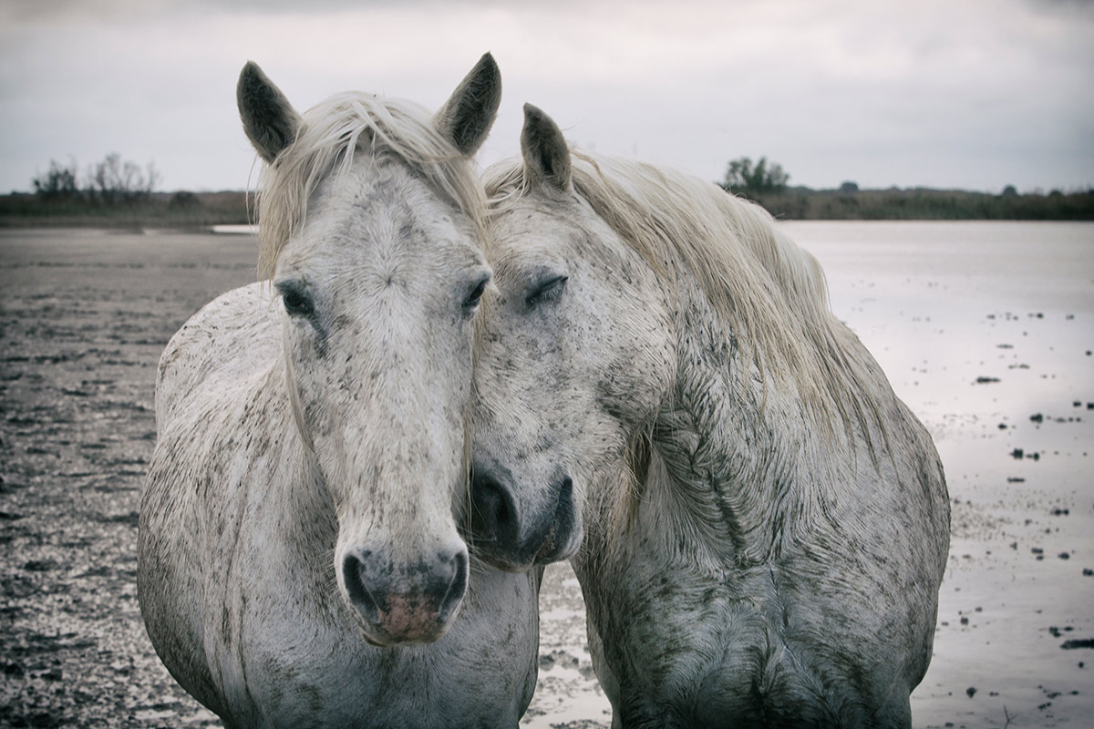 camargue_horse_workshop_2014_096