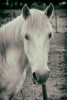 camargue_horse_workshop_2014_097