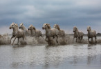 camargue_horse_workshop_2014_098