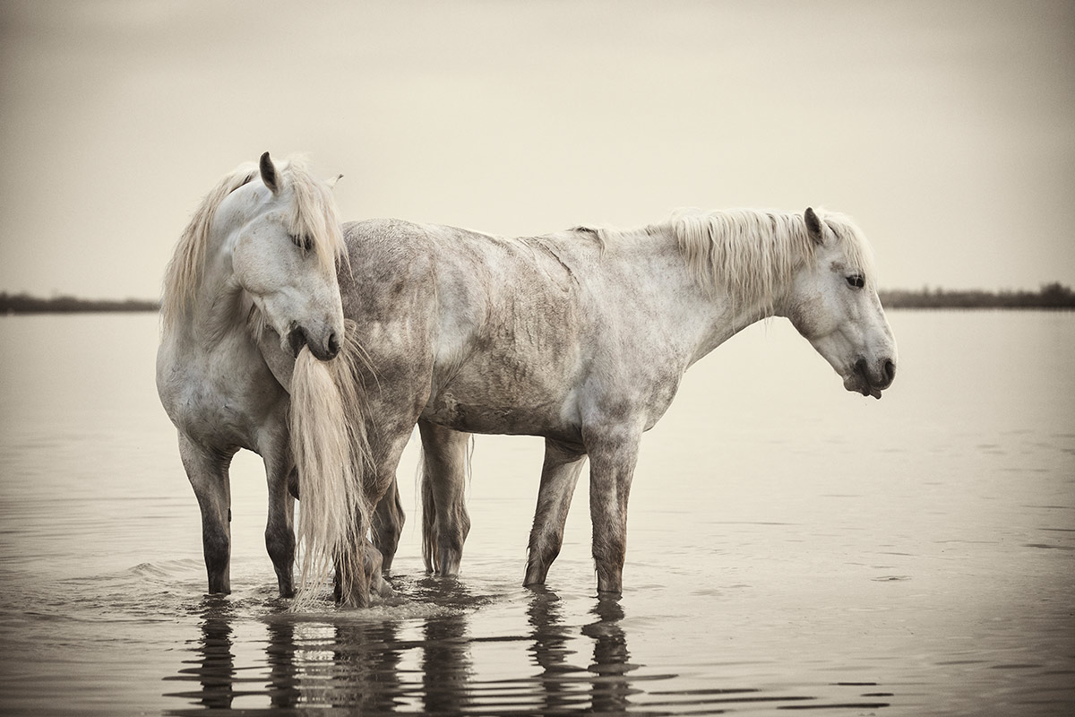 camargue_horse_workshop_2014_099