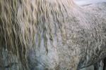 camargue_horse_workshop_2014_103