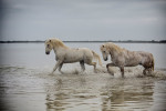 camargue_horse_workshop_2014_105