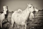 camargue_horse_workshop_2014_107