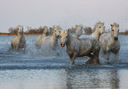 camargue_horse_workshop_2014_108