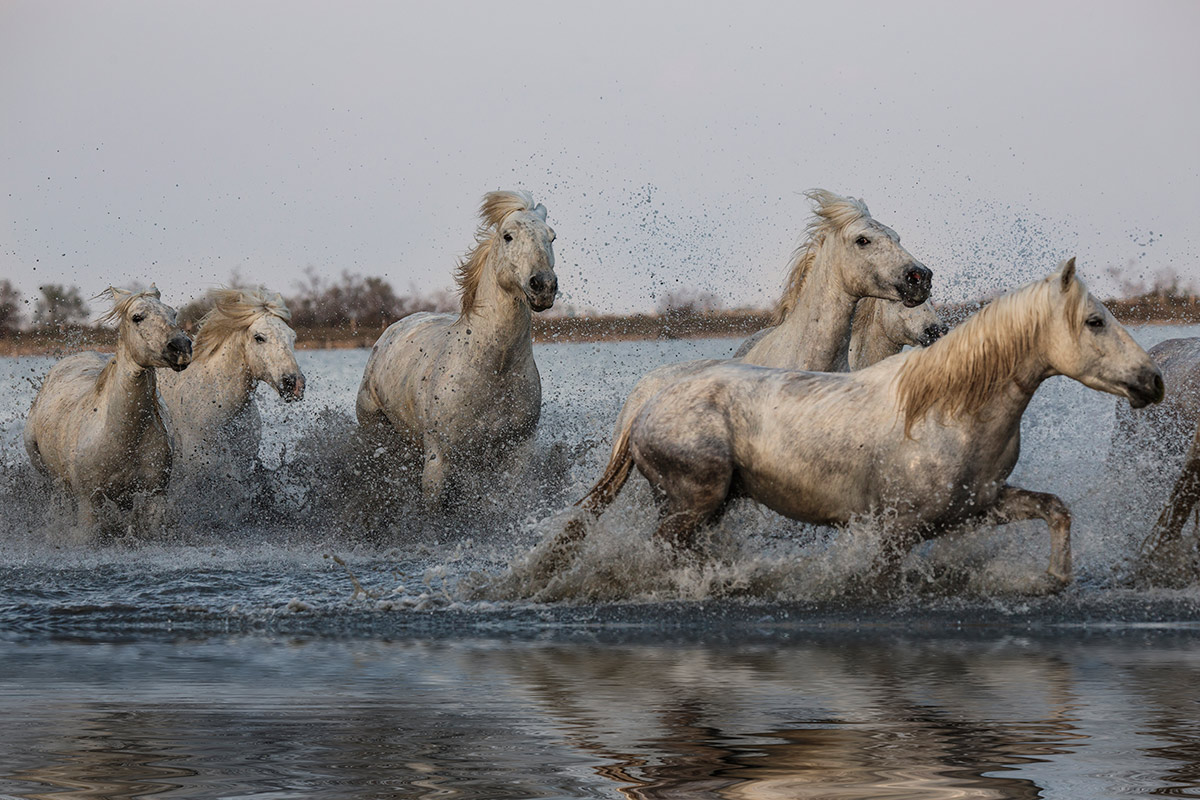 camargue_horse_workshop_2014_109