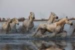camargue_horse_workshop_2014_109
