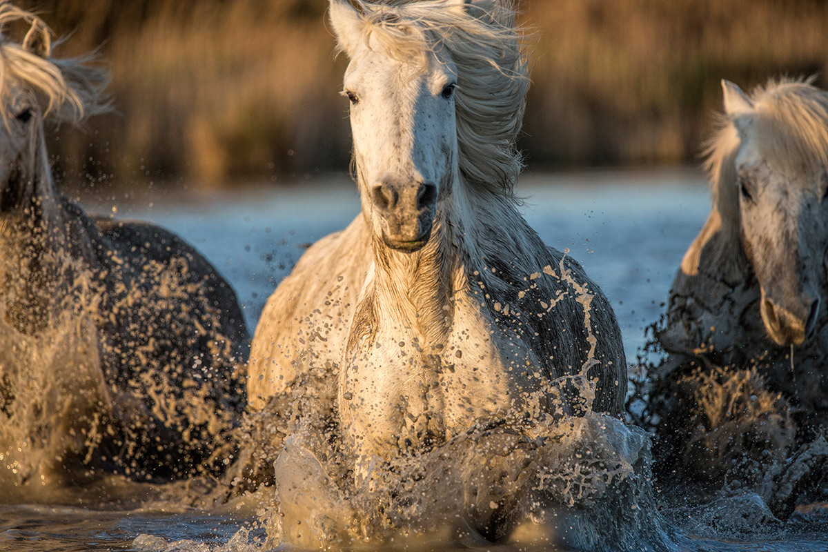 camargue_horse_workshop_2014_112
