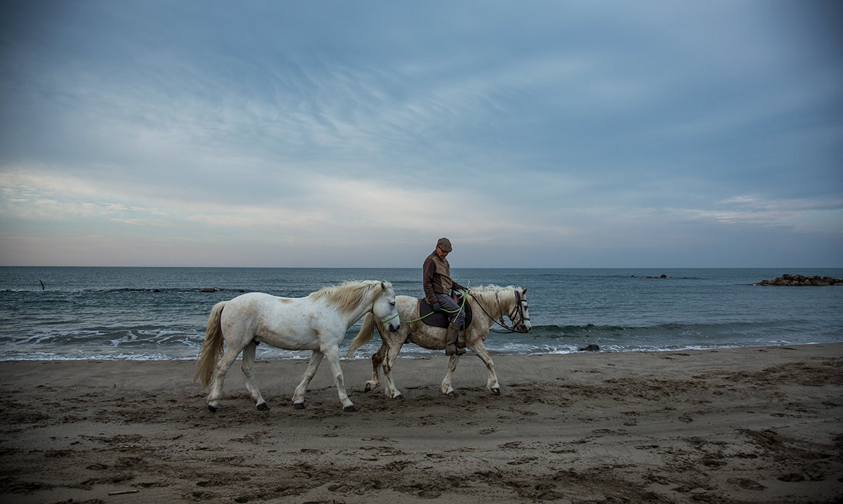 camargue_horse_workshop_2014_192