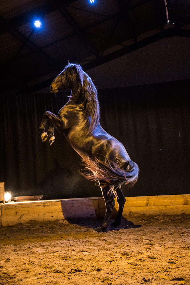 camargue_horse_workshop_2014_193