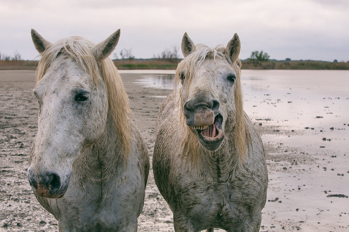 camargue_horse_workshop_2014_201