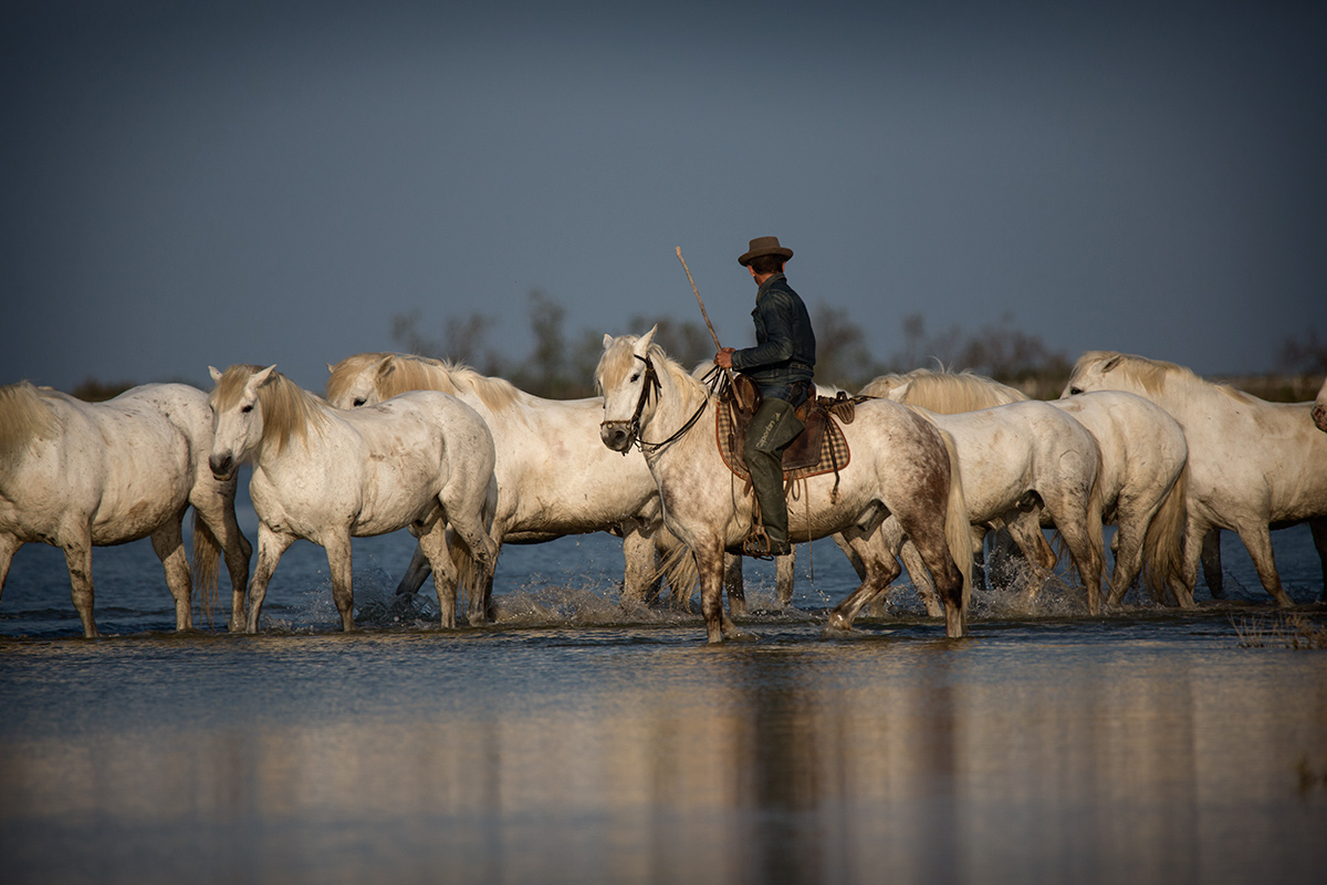 camargue_horse_workshop_2014_2011