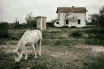 camargue_horse_workshop_2014_202