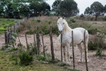 camargue_horse_workshop_2014_203