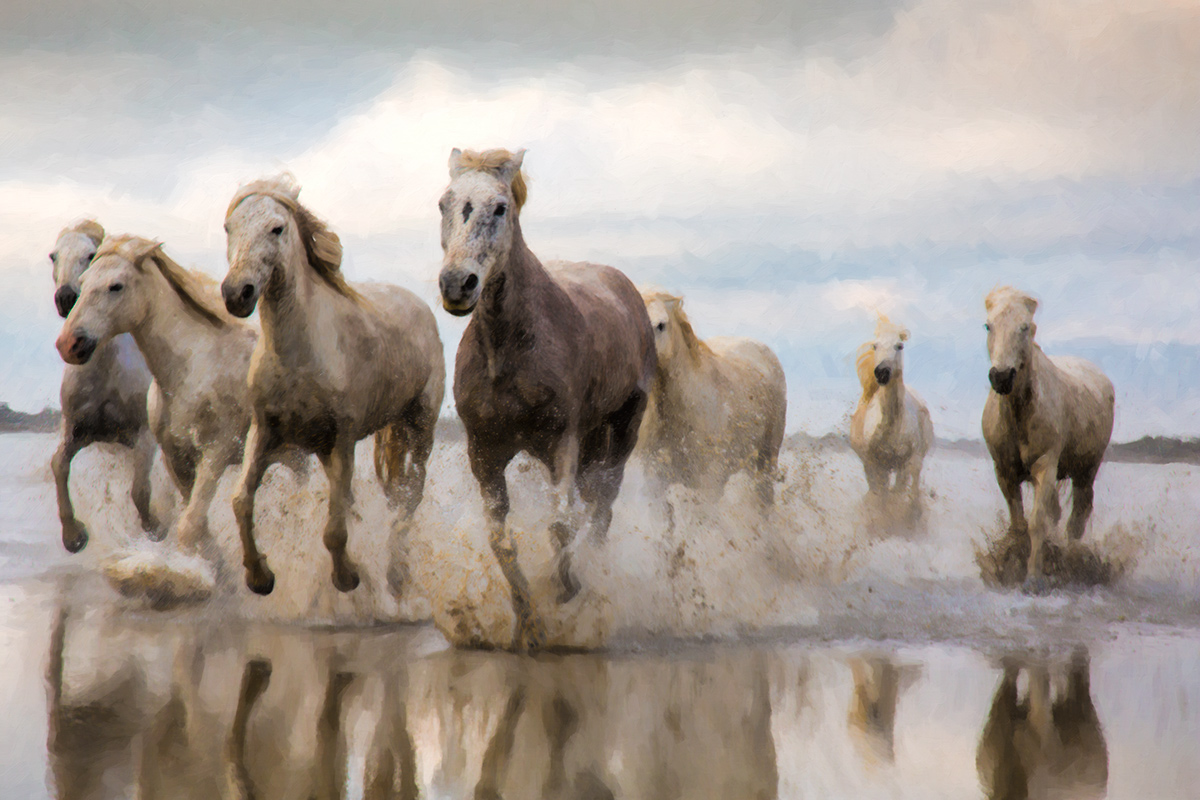 camargue_horse_workshop_2014_207