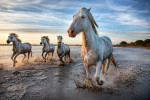 camargue_horse_workshop_france_2016_01
