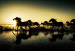 camargue_horse_workshop_france_2016_02