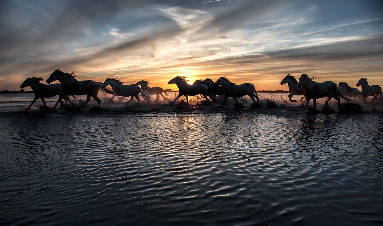 camargue_horse_workshop_france_2016_03