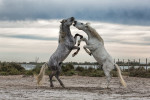 camargue_horse_workshop_france_2016_04
