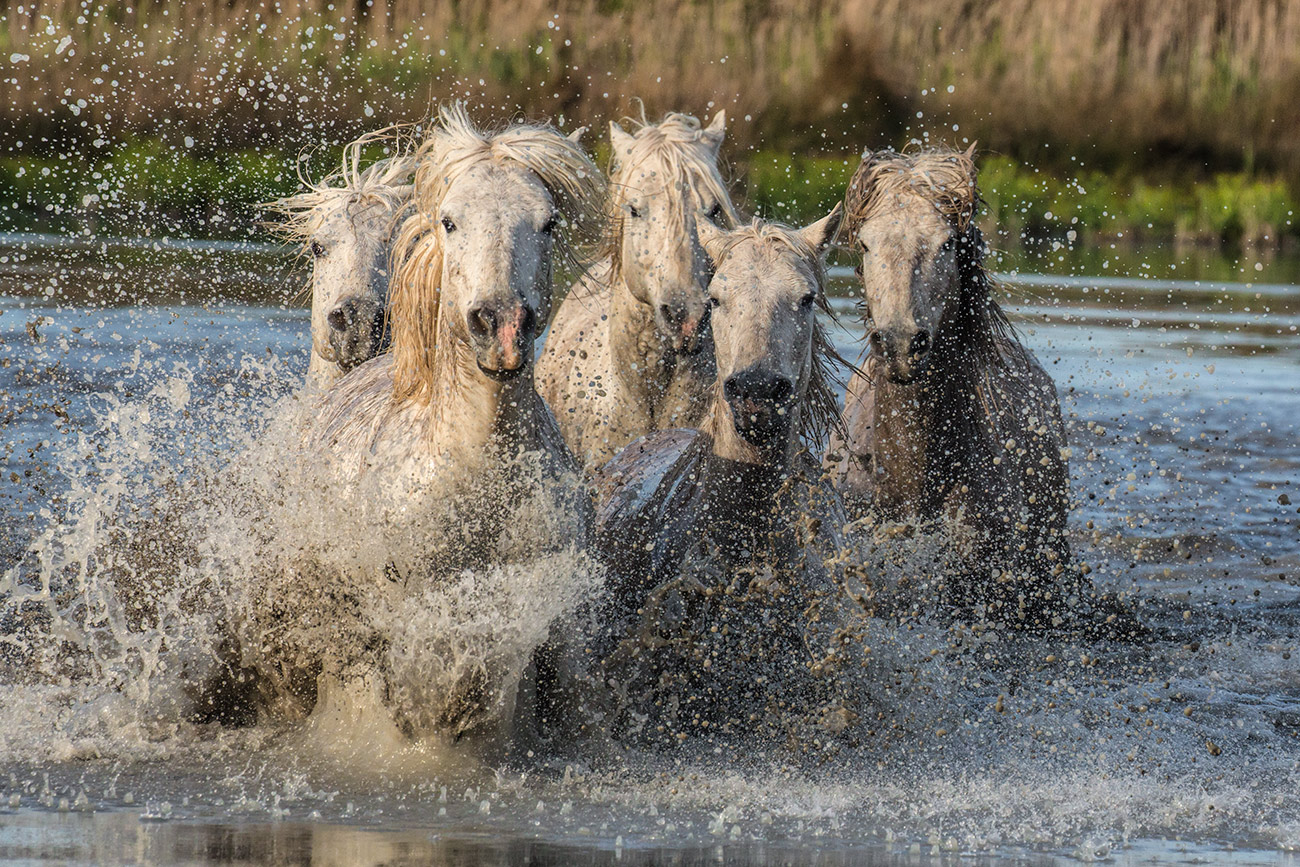 camargue_horse_workshop_france_2016_05