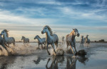 camargue_horse_workshop_france_2016_06