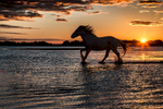 camargue_horse_workshop_france_2016_08
