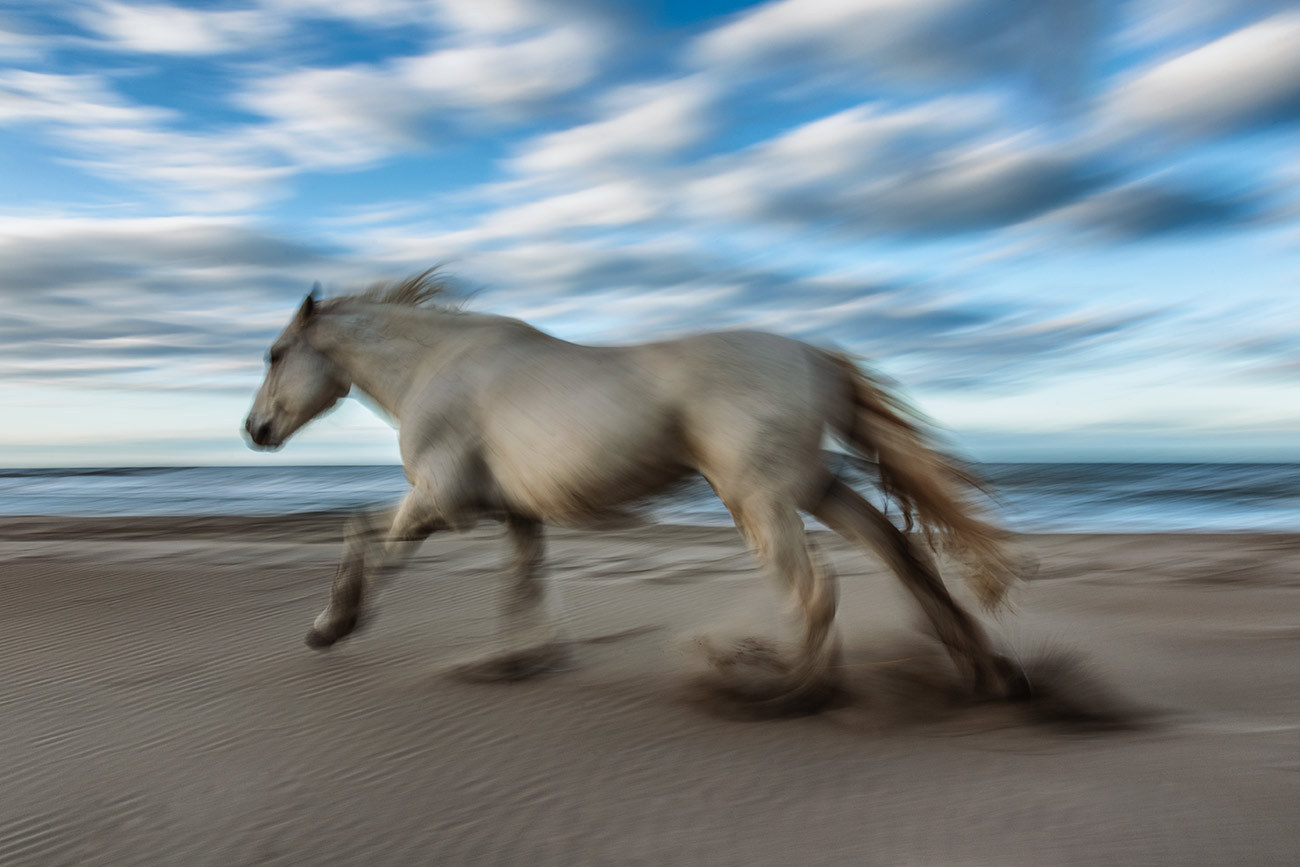 camargue_horse_workshop_france_2016_09