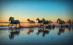 camargue_horse_workshop_france_2016_11