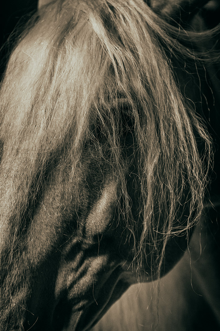 camargue_horse_workshop_france_2016_12