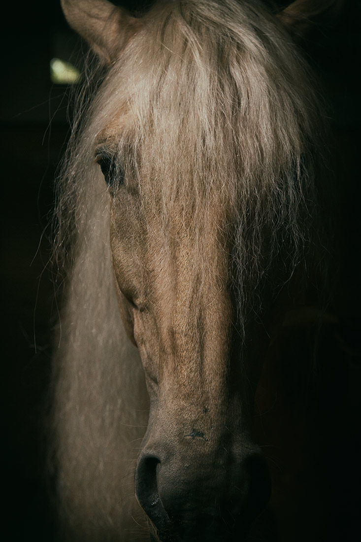 camargue_horse_workshop_france_2016_13