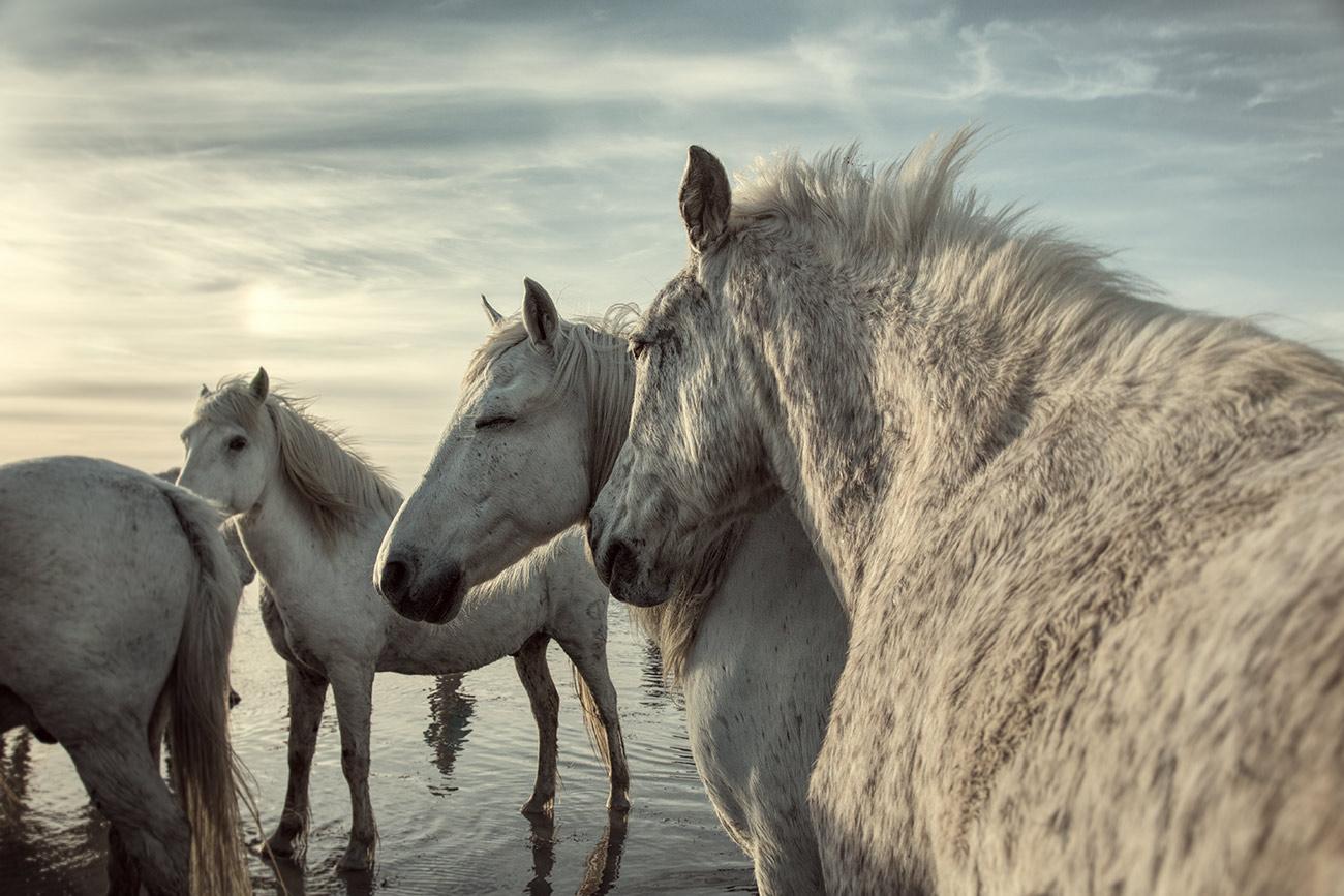camargue_horse_workshop_france_2016_16