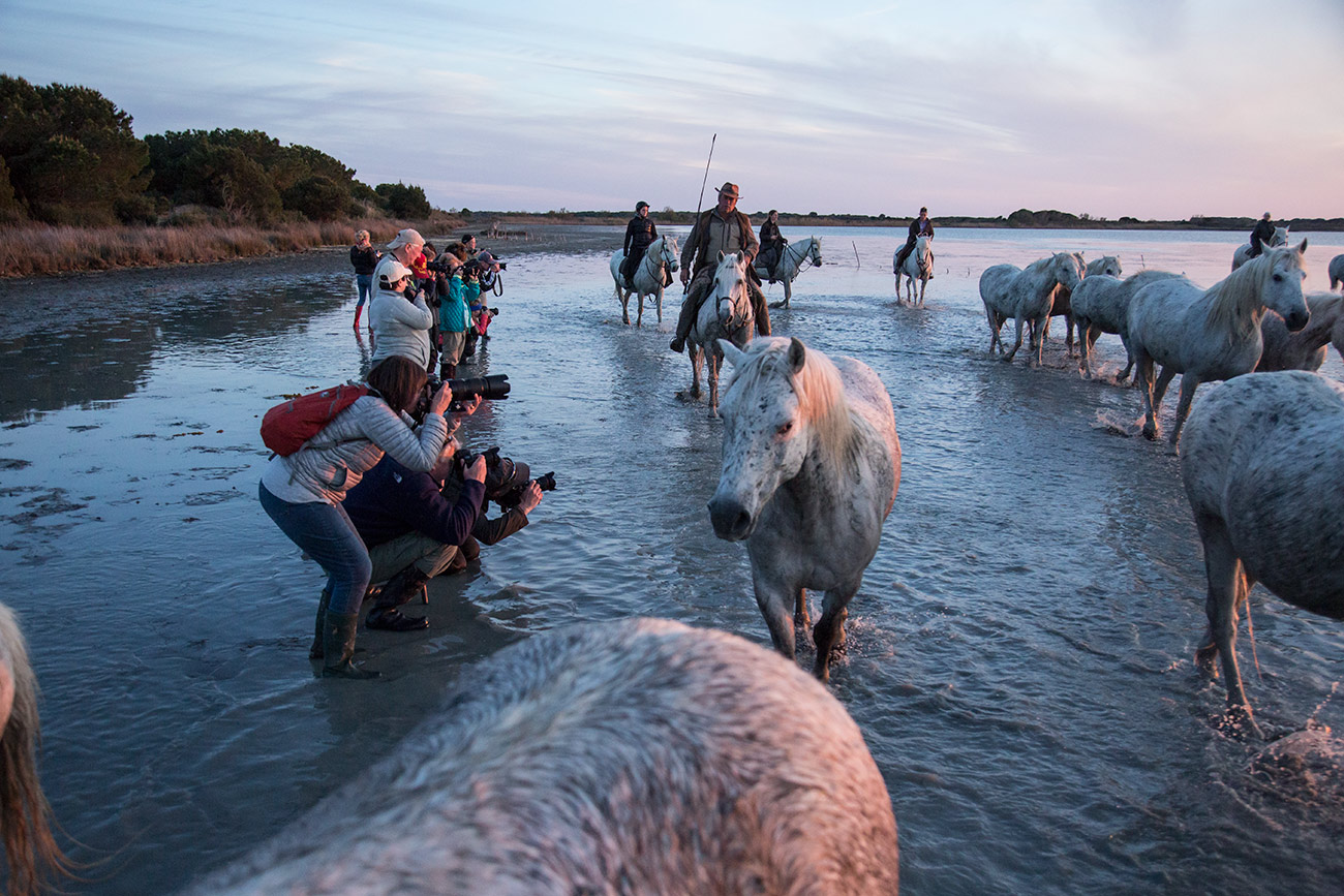 camargue_horse_workshop_france_2016_22