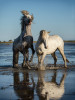 camargue_horse_workshop_france_2016_24