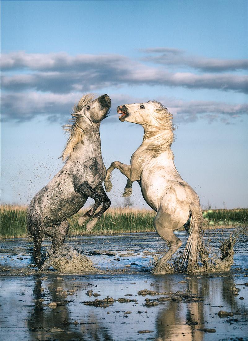 camargue_horse_workshop_france_2016_25