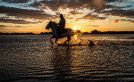 camargue_horse_workshop_france_2016_27
