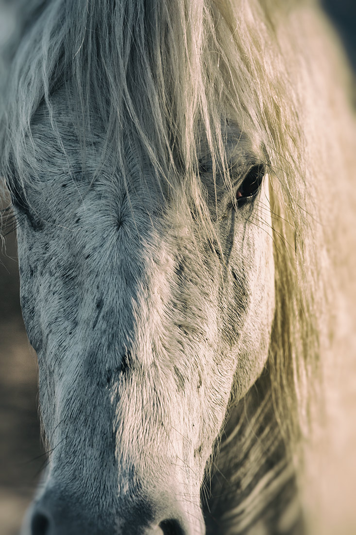 camargue_horse_workshop_france_2016_34