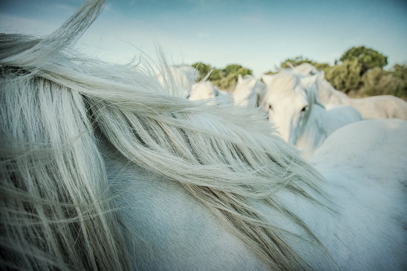 camargue_horse_workshop_france_2016_36