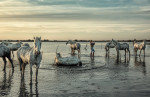 camargue_horse_workshop_france_2016_37