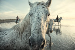 camargue_horse_workshop_france_2016_38