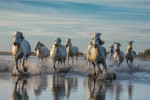 camargue_horse_workshop_france_2016_41