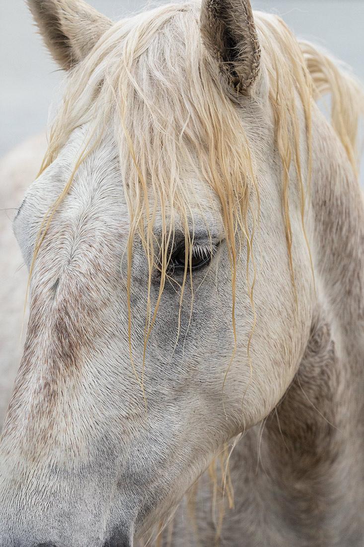 camargue_horse_workshop_france_2018_03