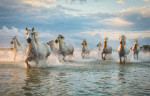 camargue_horse_workshop_france_2018_05