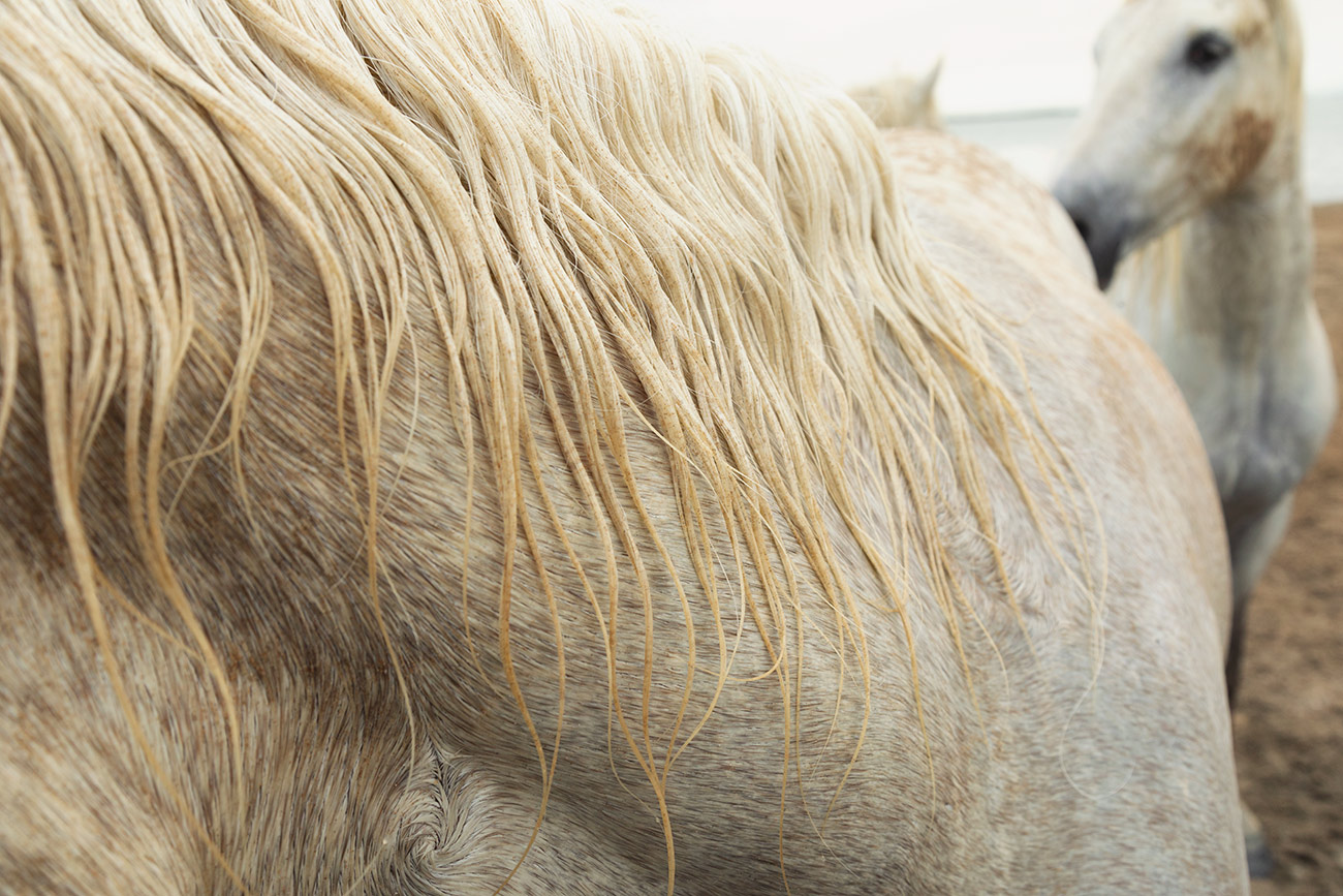 camargue_horse_workshop_france_2018_08
