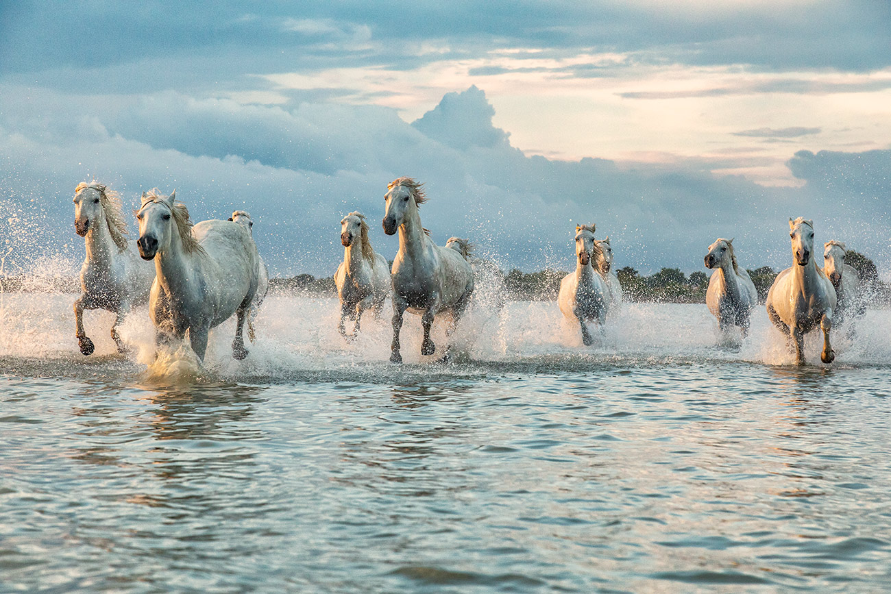 camargue_horse_workshop_france_2018_09