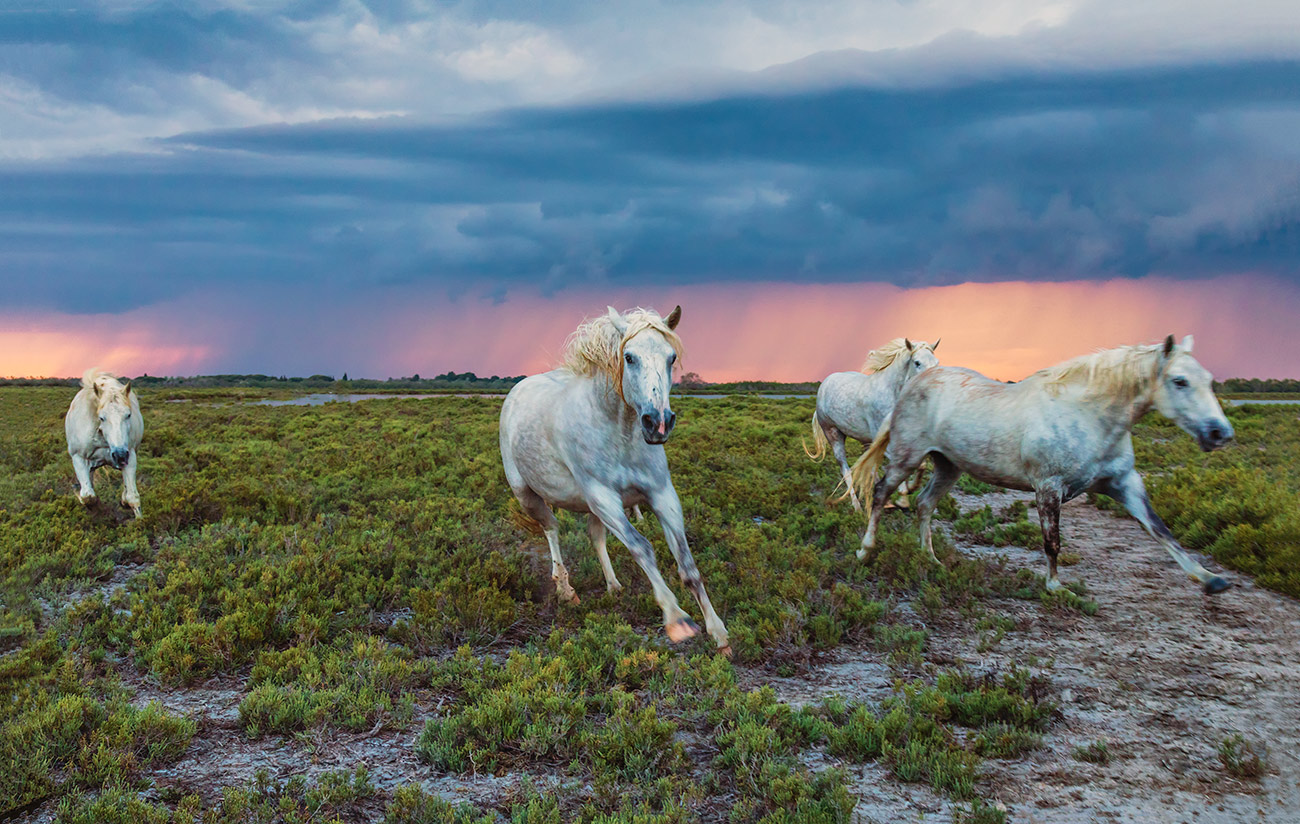 camargue_horse_workshop_france_2018_10