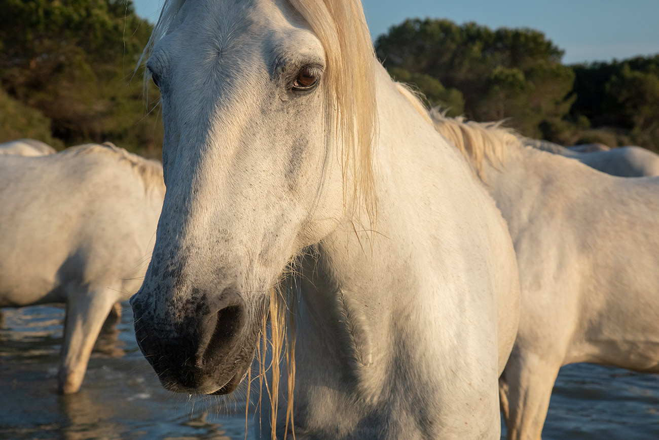 camargue_horse_workshop_france_2018_15