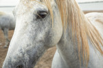 camargue_horse_workshop_france_2018_17