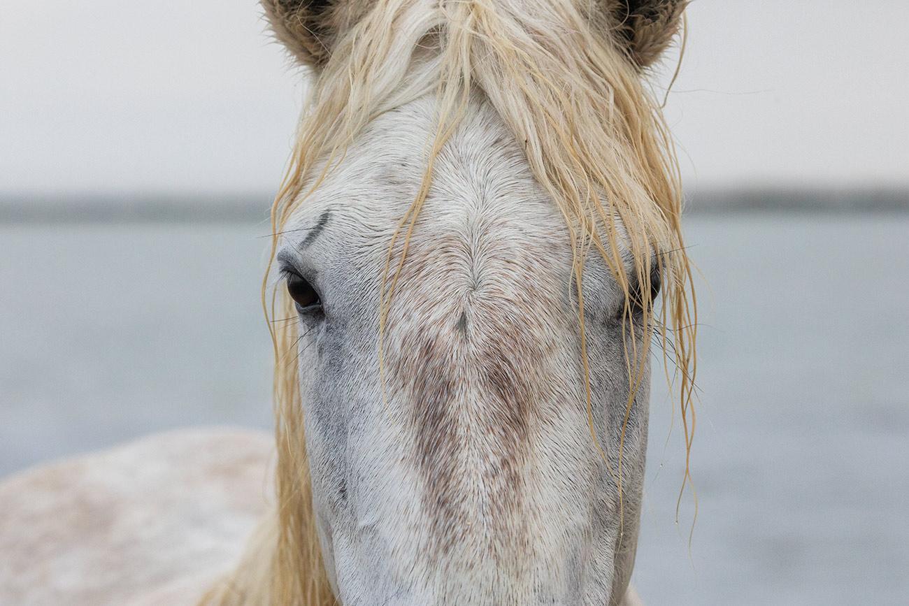 camargue_horse_workshop_france_2018_18
