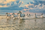 camargue_horse_workshop_france_2018_19