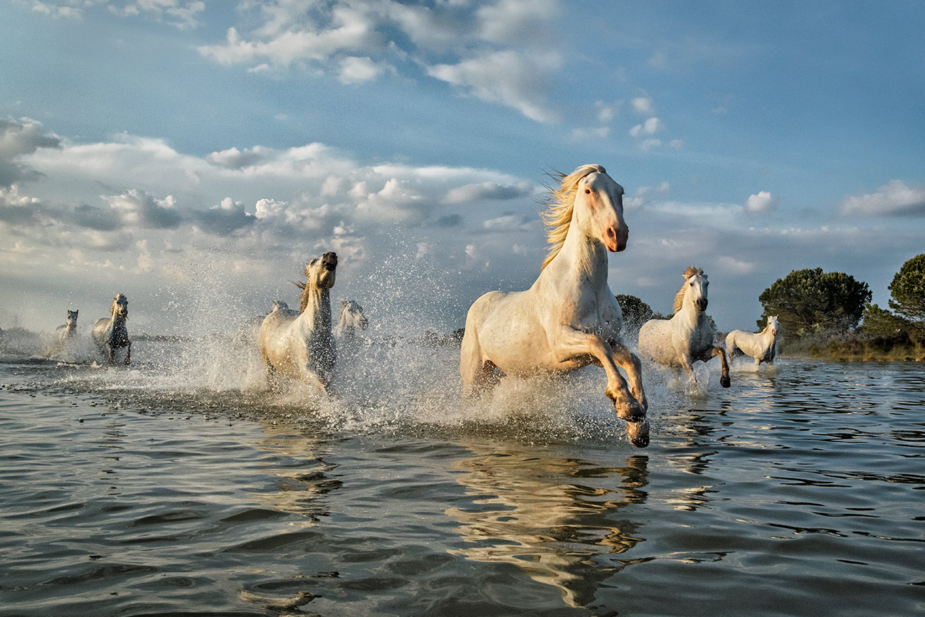 camargue_horse_workshop_france_2018_20
