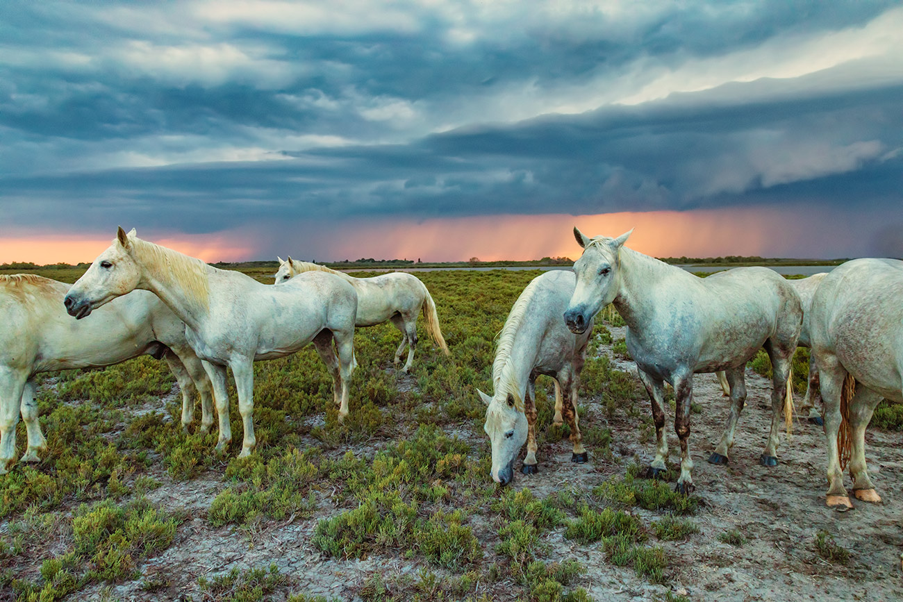 camargue_horse_workshop_france_2018_21